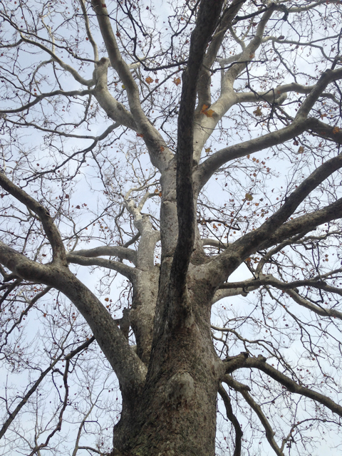 Bark: A Field Guide to Trees of the Northeast - Know Your Trees