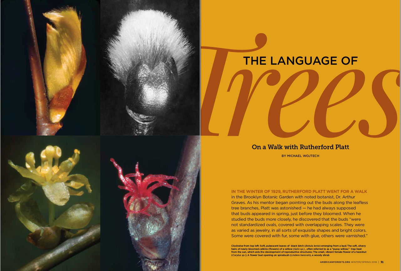 The Language of Trees_Michael Wojtech_American Forests Magazine